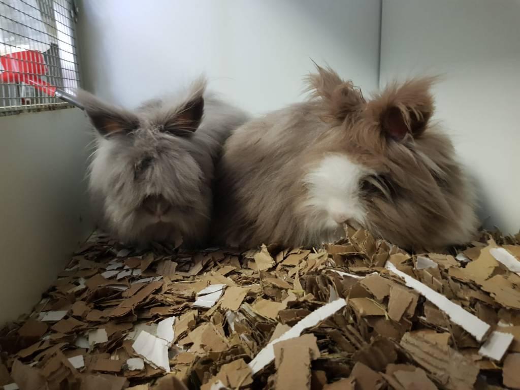 Dirk & Jubelientje zoeken hun eigen verzorgingstehuis