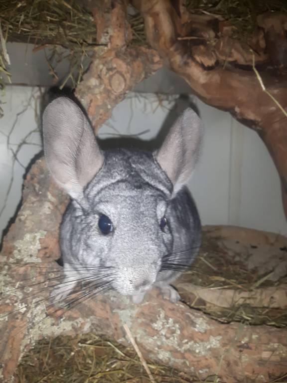 Puma zoekt een maatje met thuisbasis