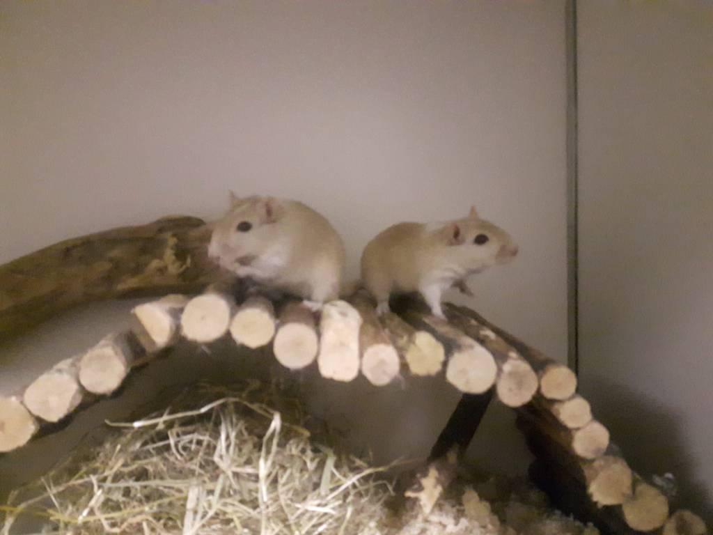 Sung & Sam zoeken uitkijktoren