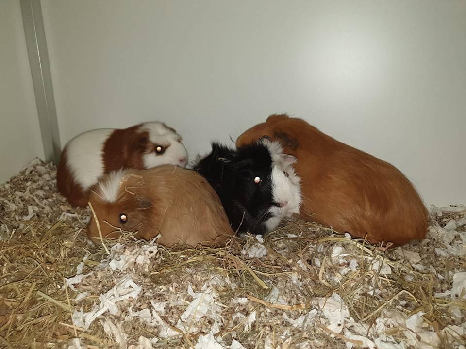 Zusjes Sable, Savannah, Sascha & Steffie willen een liefdevol, blijvend huisje
