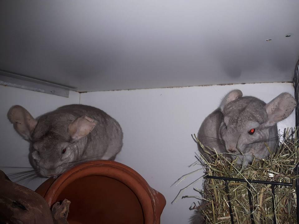 Björn & Benny zoeken een nieuw huis waar ze kunnen blijven