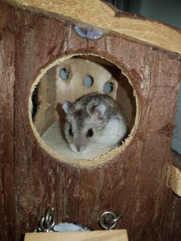 Pipi is nog jong en houdt van tunneltjes
