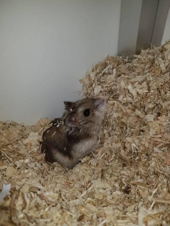 Hamster Nelson is op zoek naar een geweldige speeltuin