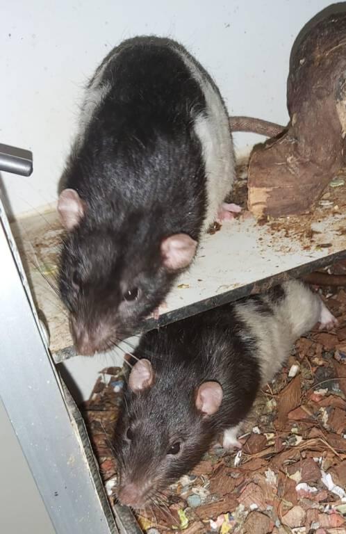 Kenny & Rat 2 zoeken een gezellige plek