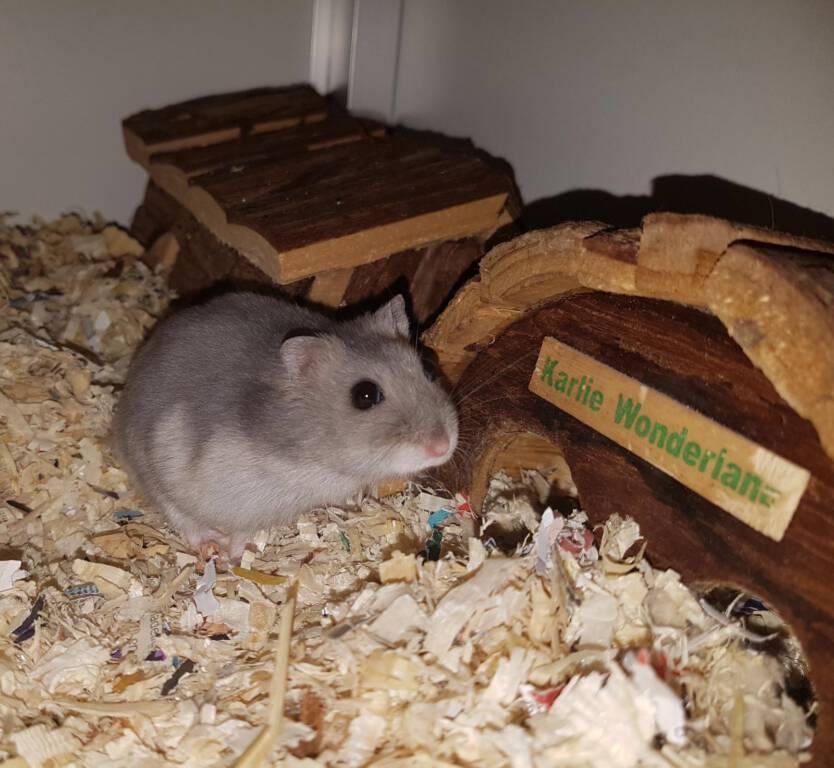 Amaya zoekt een relax huis