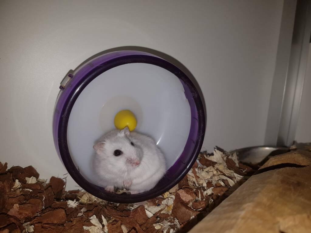 Astro wacht op zijn nieuwe huisje