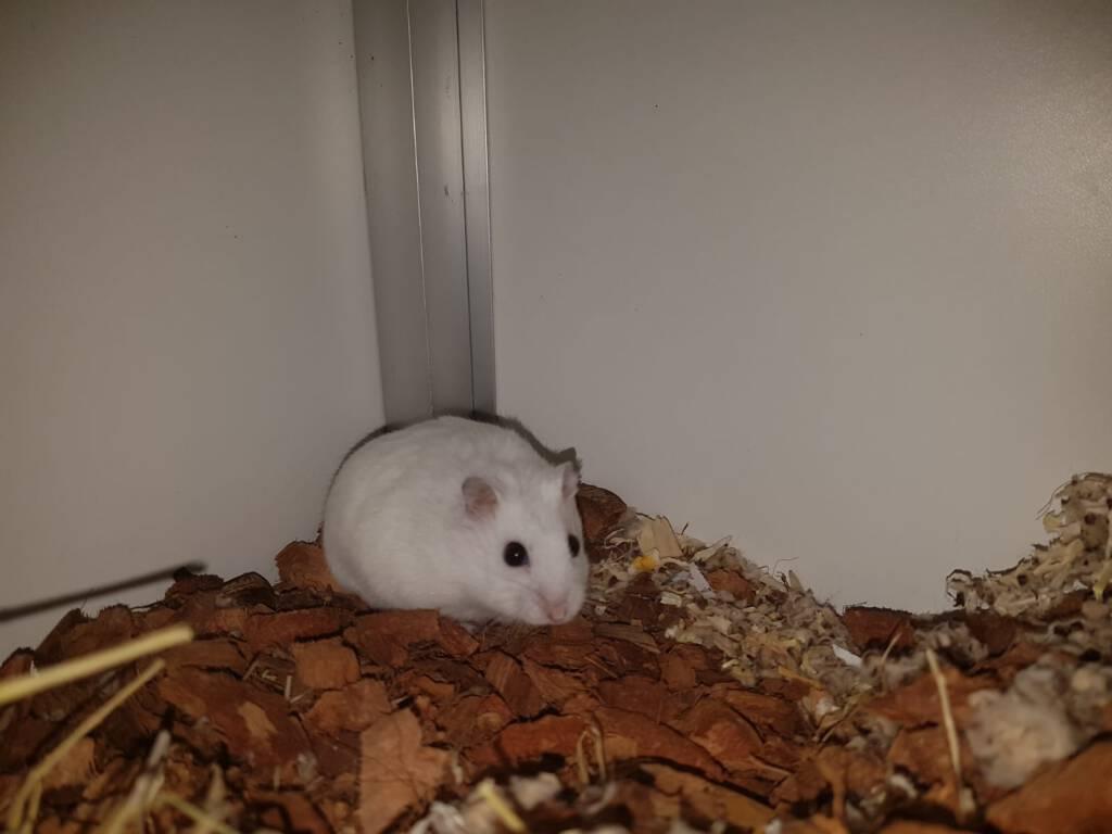 Wie helpt hamster Binto aan een huisje?