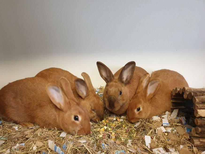 CandyCorn, Carrie, Chuck & Casper zoeken een gave tuin waar ze gewoon konijn mogen zijn