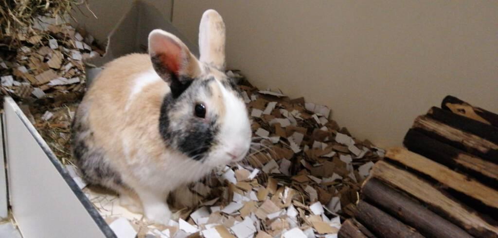 Koos konijn is opzoek naar een vriendje