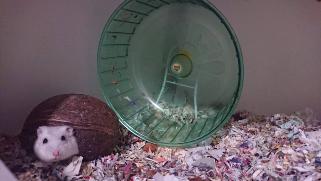 Hamster Ichi is op zoek naar het paradijs