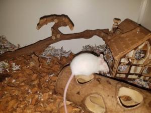 Muis Bernard wil graag soortgenootjes ontmoeten.
